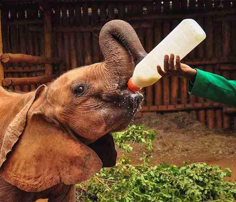 Nairobi Safari Tour