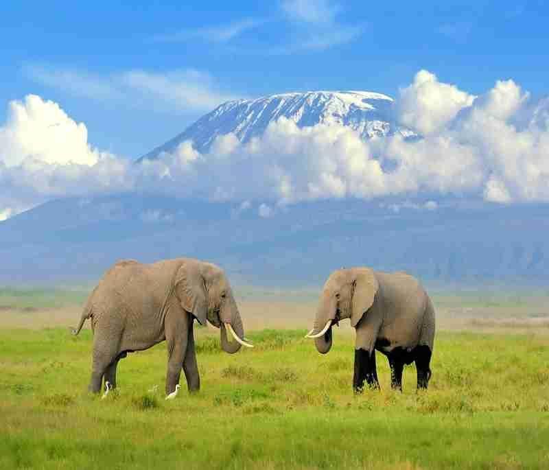 Amboseli Day Trip