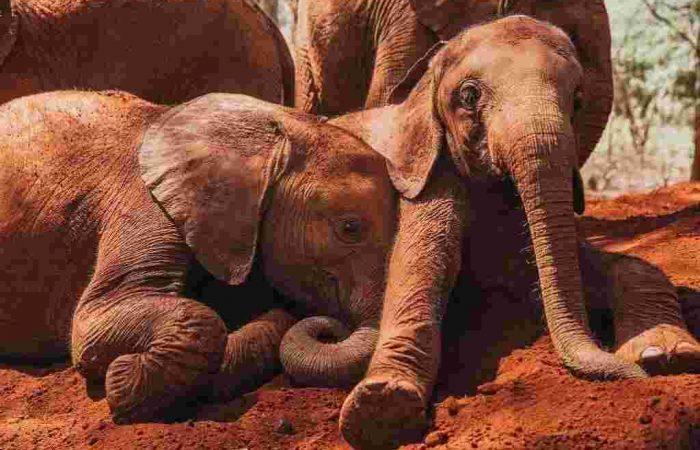 Sheldrick Elephant Orphanage Tour