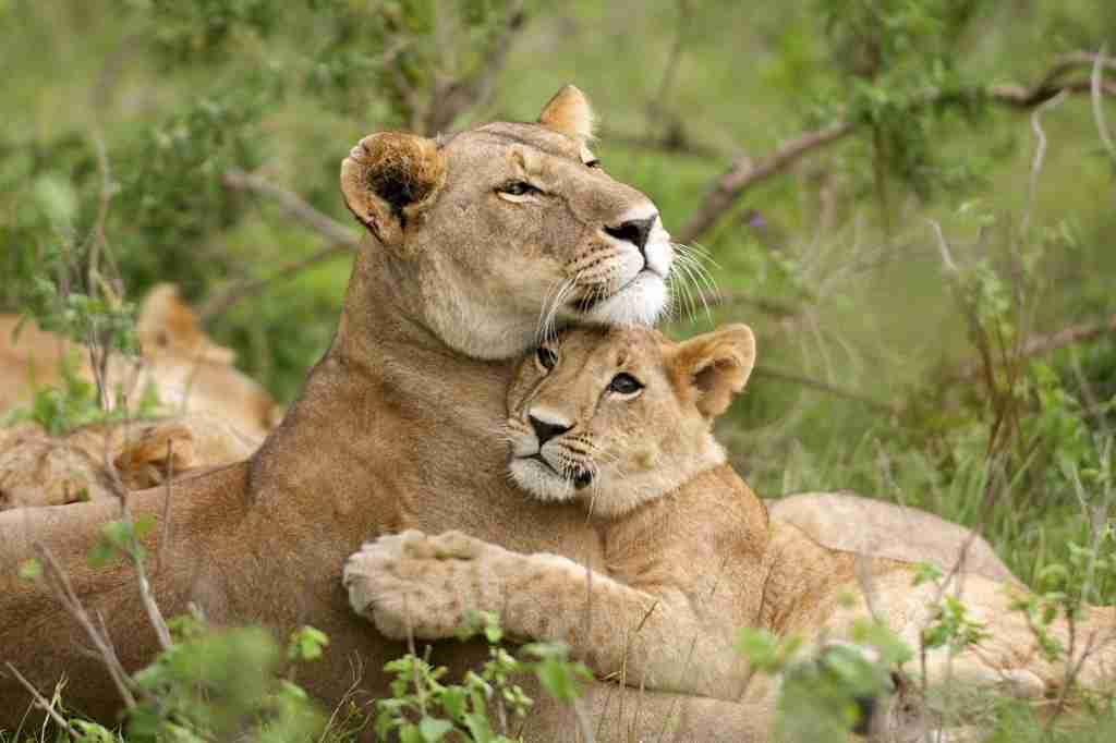 Kenya Tanzania safari tours