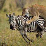 kenya tanzania budget tour