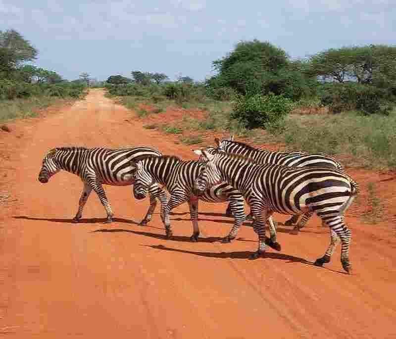 kenya tanzania trip