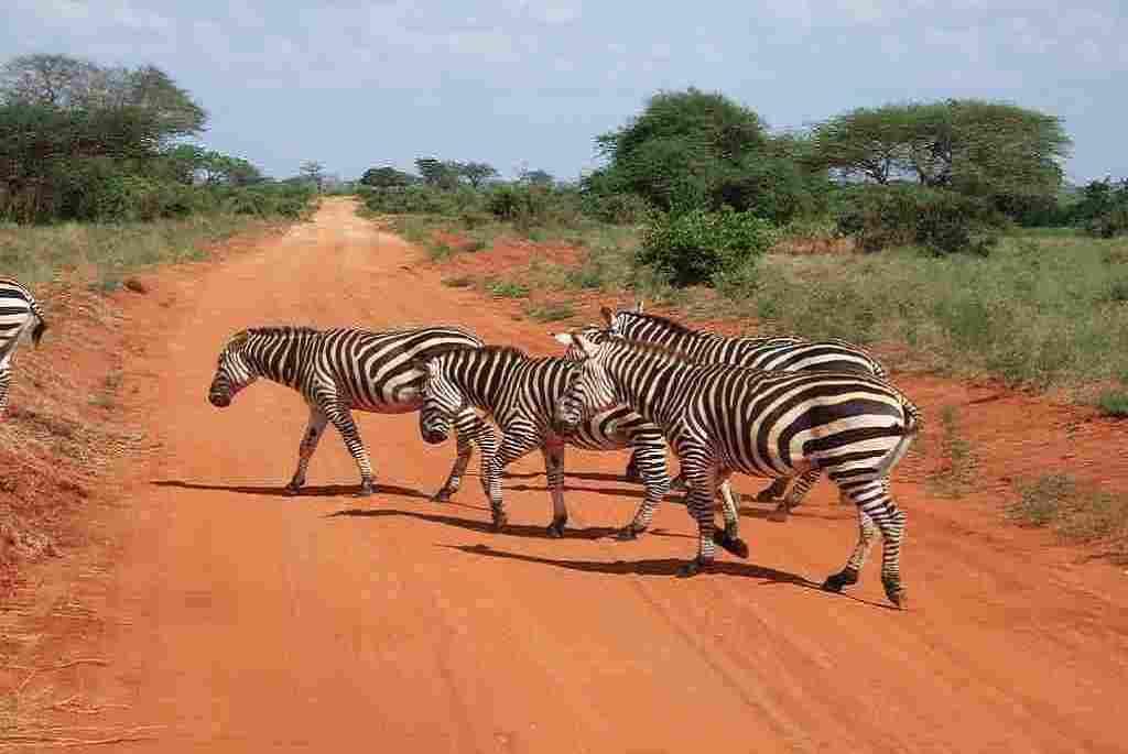 kenya tanzania trips