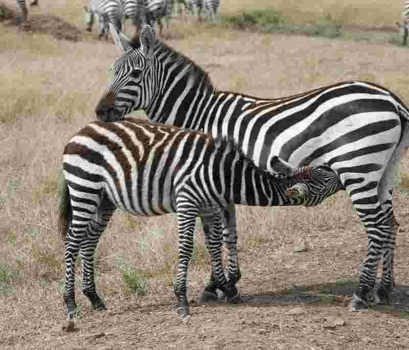 kenya wildlife trips
