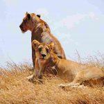 masai mara budget safari