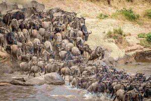 Kenya Tanzania tour