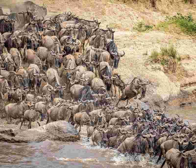 masai mara serengeti safaris