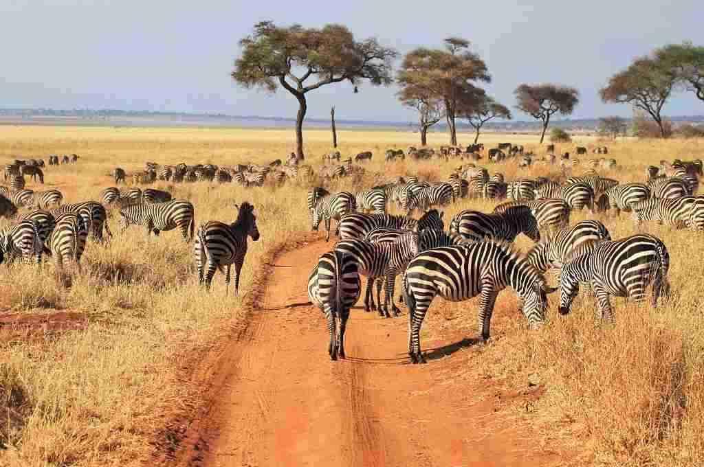 masai mara serengeti trips