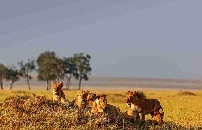tanzania camping tour