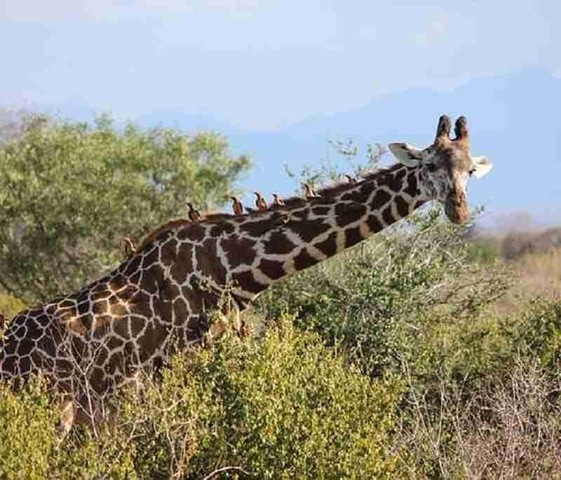 uganda safari trip